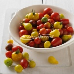 Medley Tomatoes